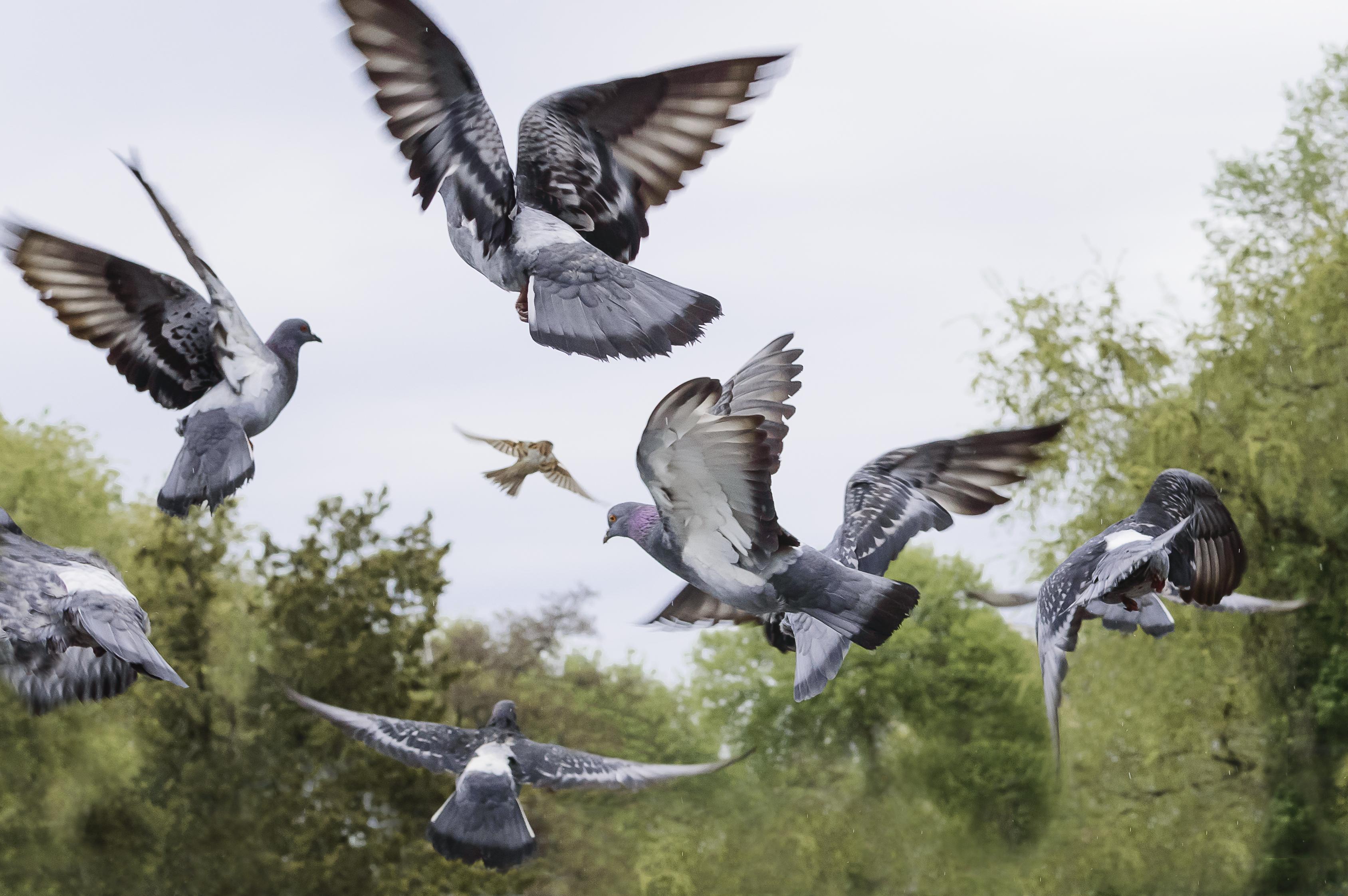 Ahuyentar palomas y aves